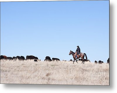 Cowboy And Cattle Metal Print by Cindy Singleton