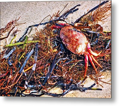 Metal Print featuring the photograph Crab Boil by William Fields