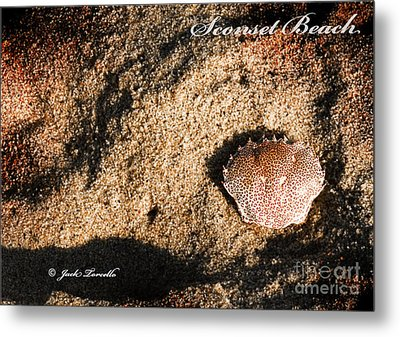 Metal Print featuring the photograph Crab Shell 'sconset Beach Nantucket by Jack Torcello