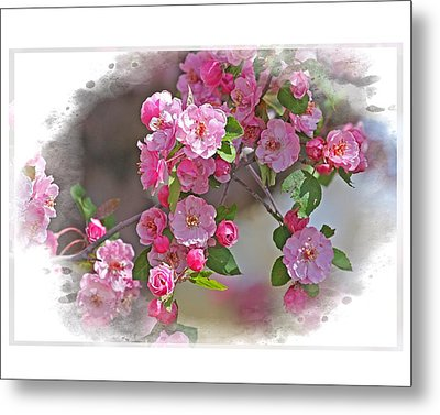 Crabapple Plethora Metal Print