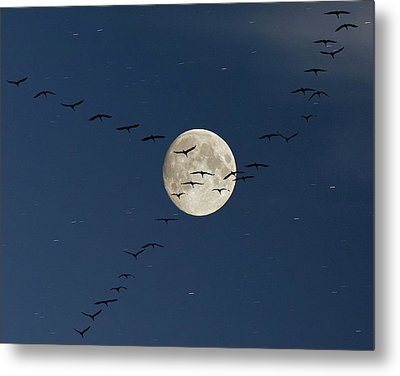 Cranes Flying To Moon Metal Print