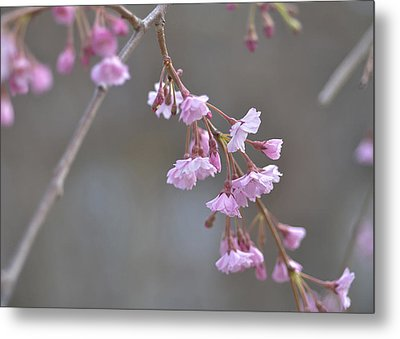 Metal Print featuring the photograph Crepe Myrtle by Lisa Phillips