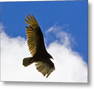 Crested Caracara Metal Print by Roger Wedegis