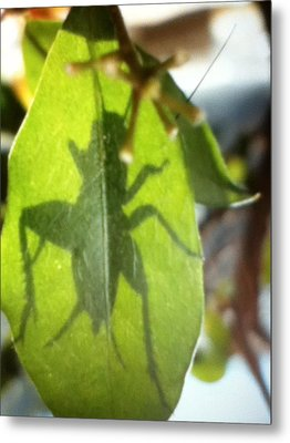 Cricket Shadow Metal Print