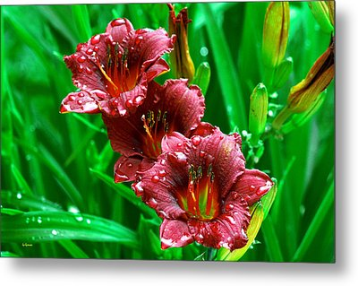 Crimson Lilies In April Shower Metal Print
