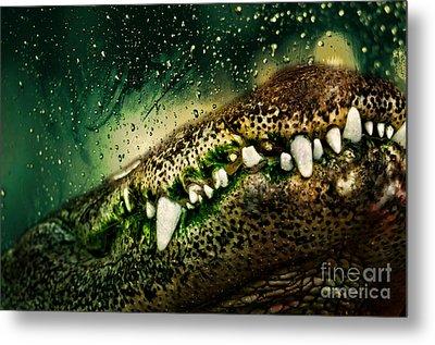Crocodile Teeth Metal Print by Denis Pristavko