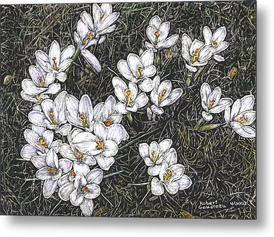 Crocus Flowers Metal Print by Robert Goudreau