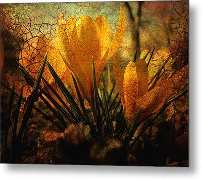 Crocus In Spring Bloom Metal Print by Ann Powell