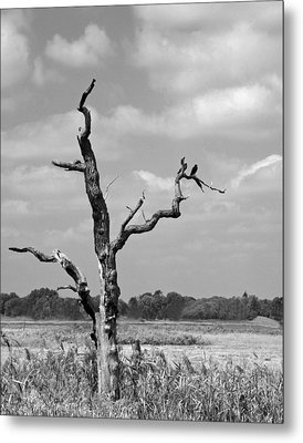 Metal Print featuring the photograph Crow In Dead Tree by Brooke T Ryan