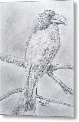 Crowned Hornbill Metal Print by Gilbert Pennison
