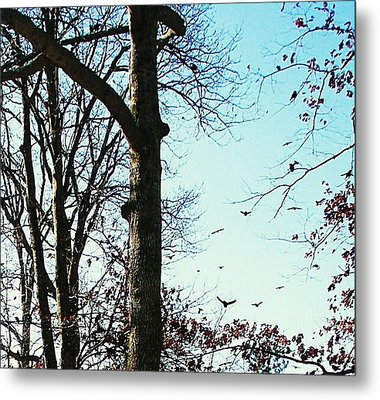 Metal Print featuring the photograph Crows In For Landing by Pamela Hyde Wilson