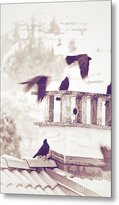 Crows On A Roof Metal Print by Silvia Ganora