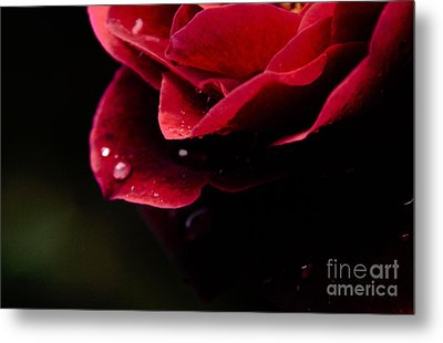 Metal Print featuring the photograph Crying Rose by Tamera James