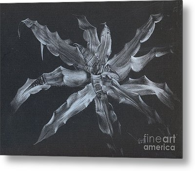 Cryptanthus Snowdrift Metal Print by Penrith Goff