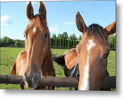 Curiosity Metal Print by Donna Bosela