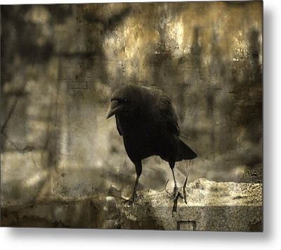 Curiosity Of The Graveyard Crow Metal Print by Gothicrow Images