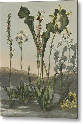 Curious American Bog Plants Metal Print by Robert John Thornton