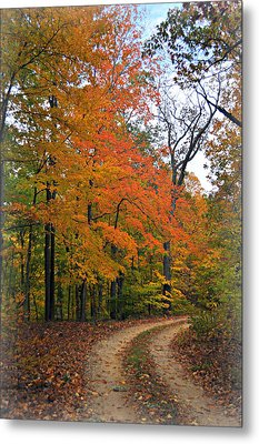 Curve In Fall Metal Print by Marty Koch