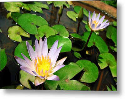 Cute Blue Lotus Metal Print by Dumindu Shanaka