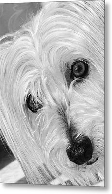Cute Dog Metal Print by Imagevixen Photography