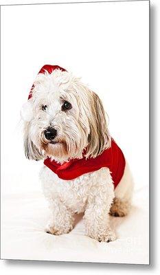 Cute Dog In Santa Outfit Metal Print