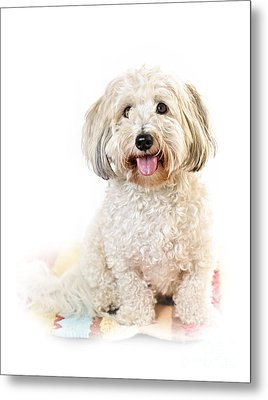 Cute Dog Portrait Metal Print by Elena Elisseeva