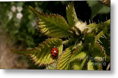 Metal Print featuring the photograph Cute Red Ladybug  by Garnett  Jaeger