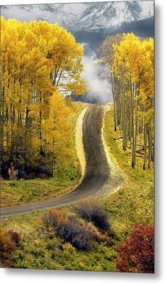 Cutting Through The Aspens Metal Print