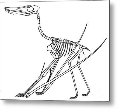 Cycnorhamphus Suevicus Metal Print by Science Source