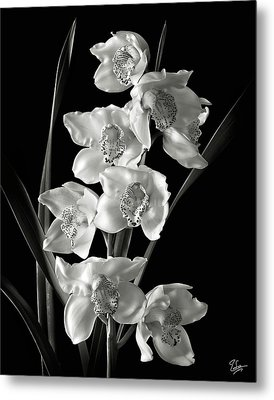 Metal Print featuring the photograph Cymbidium Cluster In Black And White by Endre Balogh