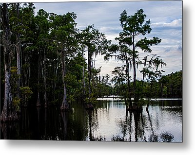 Metal Print featuring the photograph Cypress Swamp In Louisiana by Ester  Rogers
