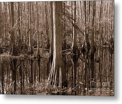Cypress Swamp Reflection In Sepia Metal Print by Carol Groenen