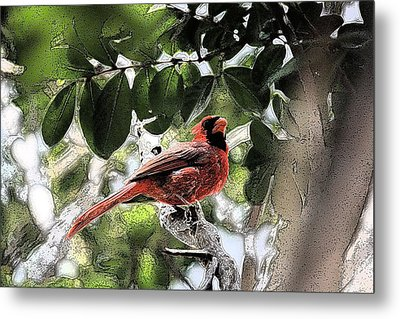 Metal Print featuring the photograph Daddy Cardinal by Donna G Smith