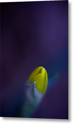 Metal Print featuring the photograph Daffodil by Jane Melgaard