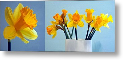 Daffodils Metal Print by Cathie Tyler