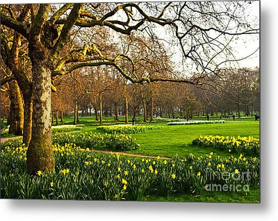 Daffodils In St. James's Park Metal Print by Elena Elisseeva