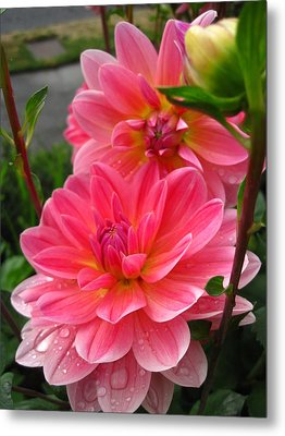 Metal Print featuring the photograph Dahlia Dew by Cheryl Perin