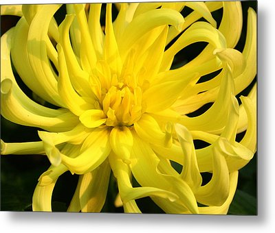 Metal Print featuring the photograph Dahlia In Yellow by Laurel Talabere