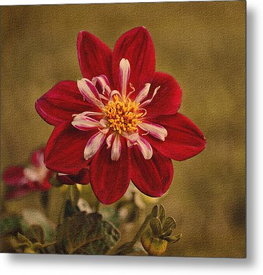 Dahlia Metal Print by Sandy Keeton