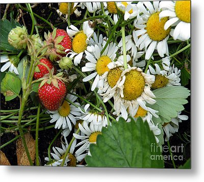 Metal Print featuring the digital art Daisies And Strawberries by Vicky Tarcau