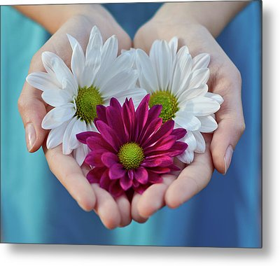 Daisies In Child Hands Metal Print by Natalia Ganelin