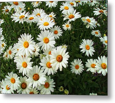 Metal Print featuring the photograph Daisies by Wendy McKennon