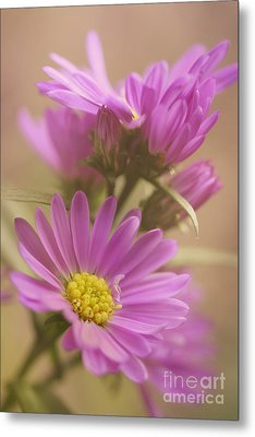 Daisy Metal Print by LHJB Photography