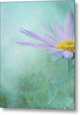 Daisy In Mist Metal Print by Sharon Lapkin