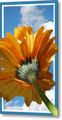 Daisy In The Sky Metal Print by Rozalia Toth
