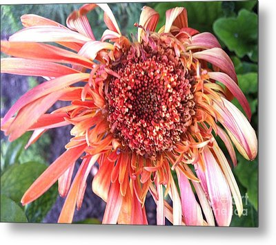 Daisy In The Wind Metal Print