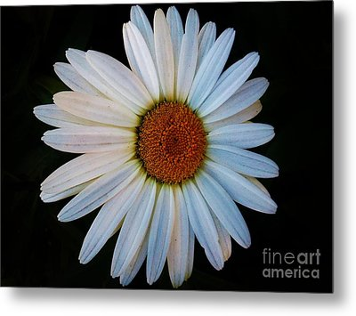Metal Print featuring the photograph Daisy by Jasna Gopic