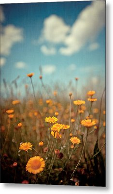 Daisy Meadow Metal Print by Boston Thek Imagery