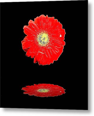 Metal Print featuring the photograph Daisy Reflection by Carolyn Repka