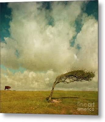 Daisy Spots A Tree Metal Print by Paul Grand